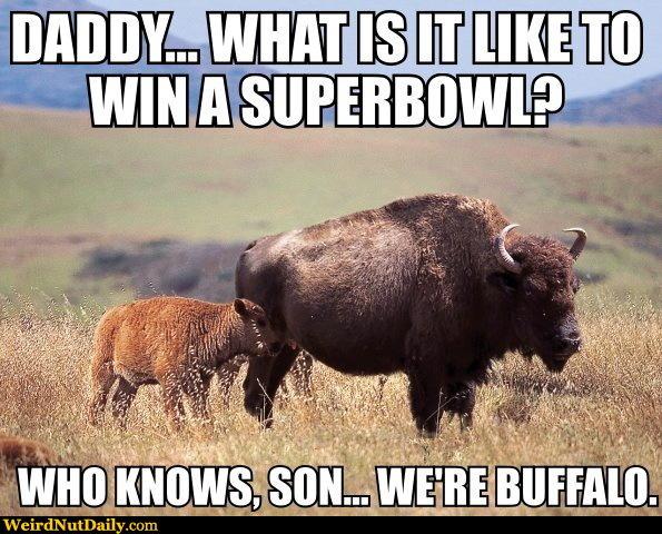 buffalo bills to be sold to pegula theganggreen com message board