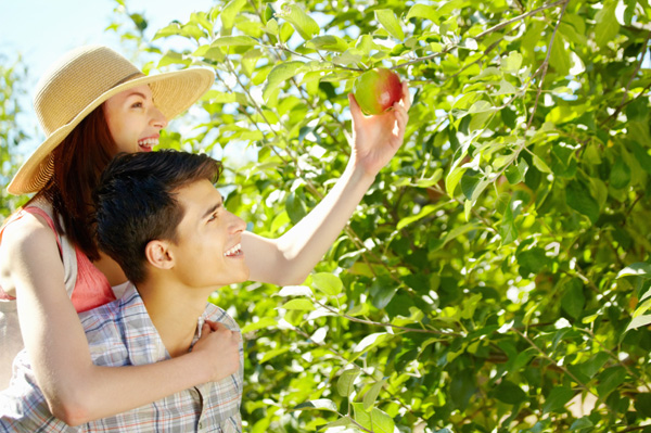 couple-picking-apples-together